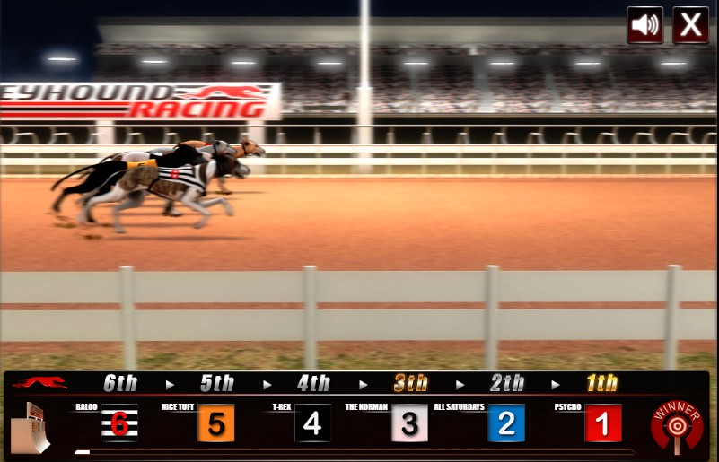 Greyhound Racing flash game